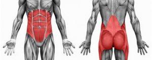 core-anatomy2