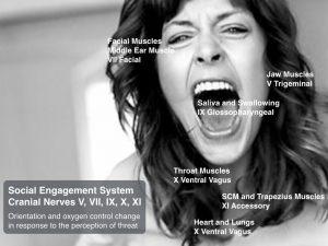 social-engagement-cranial-nerves-v1