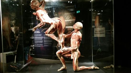 body-worlds-the-happiness