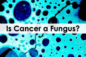 Is-Cancer-a-Fungus