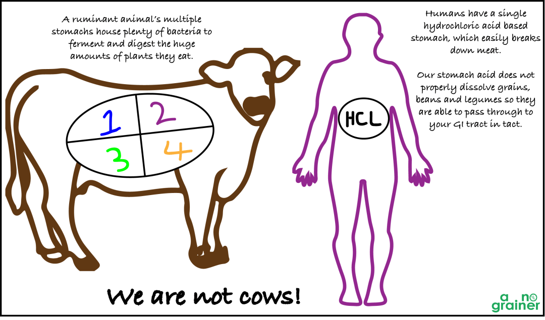 cow-vs-humans