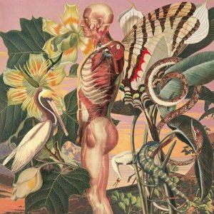Anatomy-art-by-Juan-Gatti