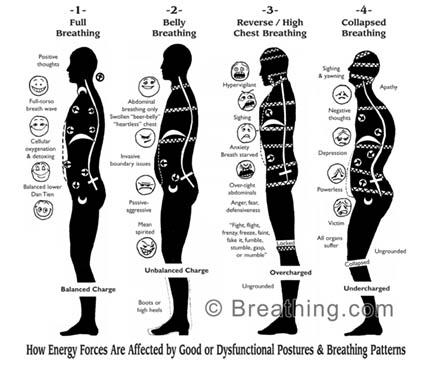 Yoga Anatomy - Postural Analysis and Breathing