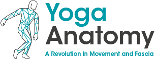 Yoga Anatomy in Manchester a Revolution in Movement Logo