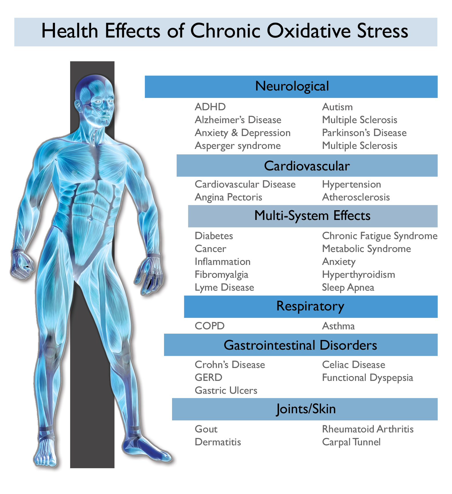 chronic-oxidative-stress-and-the-body