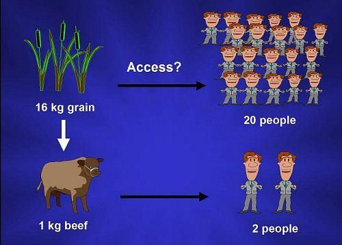 9f59d983f167bb4f93db80ebe007aa14--why-vegan-vegan-life