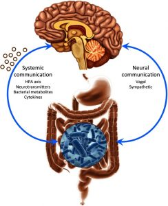 gut-brain-connection