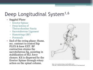 functional-training-for-lbp-20-638