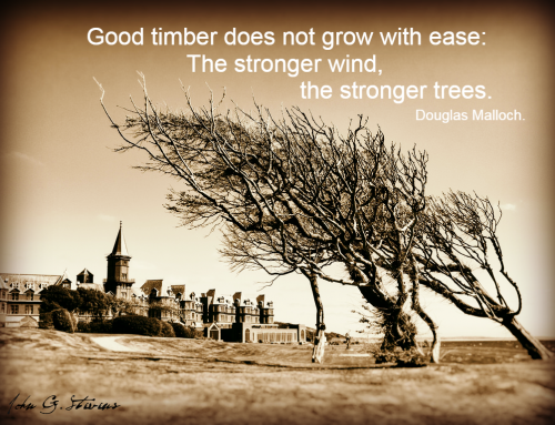 The strongest trees grow in the strongest winds